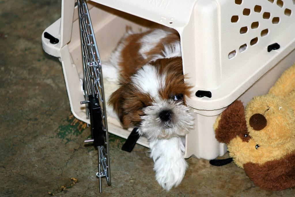 Closing The Door of the crate