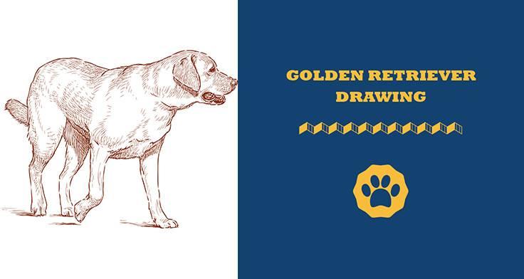 golden retriever drawing