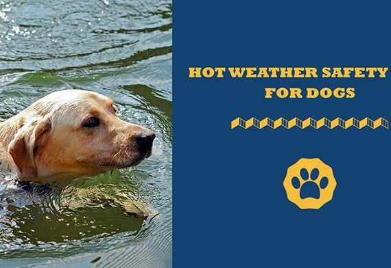 hot weather safety tips for dogs