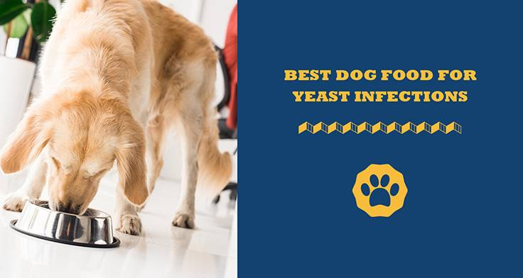 best dog food for yeast infections