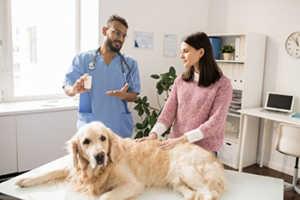 Beagle And Golden Retriever Health