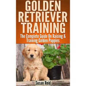 Golden Retriever Training By Susan Reid