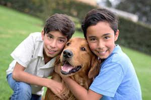 Golden Retrievers & Older Kids